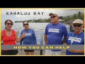 How to help Kahalu'u Bay- Learn about Coral Spawning And How YOUR sunscreen has an effect